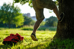 Homem novo do moderno que escala em uma árvore em um parque Foto de Stock