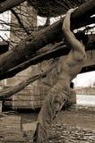 Homem novo e árvore imagem de stock