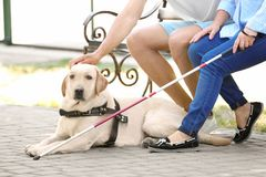 Homem novo e mulher cega com assento do cão de guia fotos de stock
