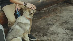 Homem novo feliz que afaga seu cão de amor no movimento do forestslow vídeos de arquivo