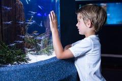 Homem novo feliz que olha peixes fotografia de stock
