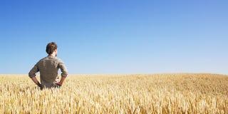 Homem novo no campo de trigo fotos de stock