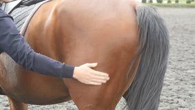 Homem novo que afaga o corpo do cavalo marrom fora Braço do garanhão masculino da castanha das carícias e das trocas de carícias  filme