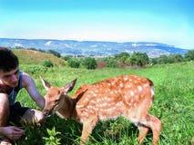 Homem novo que afaga um cervo pequeno triste na natureza Foto de Stock