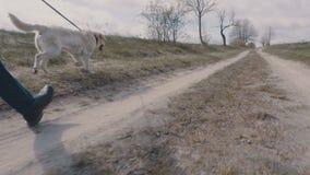 Homem novo que anda com seu cão ao longo da estrada de terra video estoque