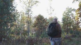 Homem novo que anda na floresta do outono, caminhando na floresta vídeos de arquivo