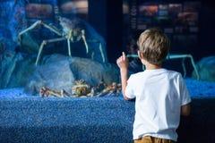 Homem novo que aponta um caranguejo gigante Foto de Stock Royalty Free