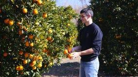 Homem novo que manipula com laranjas maduras video estoque