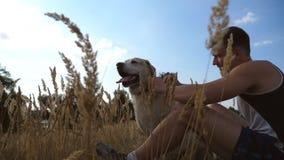 Homem novo que senta-se na grama verde no prado e que afaga seu cão Proprietário masculino que passa o tempo junto com seu Labrad video estoque