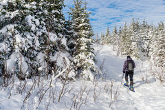 Homem novo que snowshoeing no inverno, no distrito oriental de Quebeque Foto de Stock Royalty Free