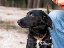 Homem perto do cão bonito preto nas mãos na floresta fotos de stock royalty free