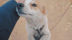 Homem que afaga o fim da cabeça de cão acima da vista de primeira pessoa o homem está afagando o cão amizade entre o cão e o amor filme