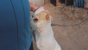 Homem que afaga o fim da cabeça de cão acima da vista de primeira pessoa o homem está afagando o cão amizade entre o cão e o home vídeos de arquivo