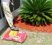 Homem que ajunta a palha de canteiro para o jardim Fotos de Stock