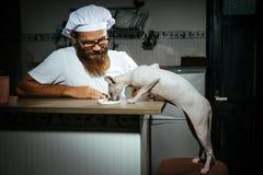 Homem que alimenta o gato com fome Fotos de Stock Royalty Free