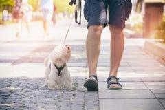 Homem que anda com cão Fotos de Stock