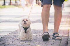 Homem que anda com cão imagens de stock