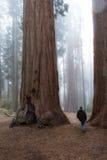 Homem que anda em uma floresta gigante Foto de Stock Royalty Free