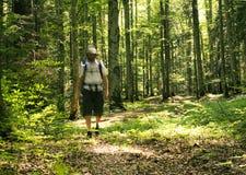 Homem que anda na floresta Fotos de Stock Royalty Free