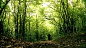 Homem que anda na floresta video estoque
