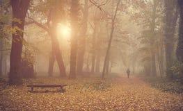 Homem que anda na floresta do outono foto de stock royalty free
