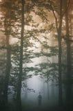 Homem que anda na floresta nevoenta no por do sol Foto de Stock Royalty Free