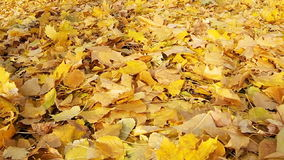 Homem que anda nas folhas caídas do amarelo vídeos de arquivo