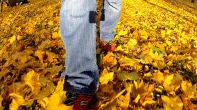 Homem que anda nas folhas de outono video estoque