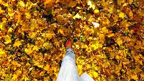 Homem que anda nas folhas de outono Movimento lento video estoque