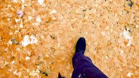 Homem que anda no parque da queda do inverno nas folhas do gingko vídeos de arquivo