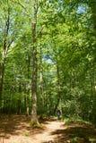 Homem que anda o cão na floresta Fotografia de Stock Royalty Free