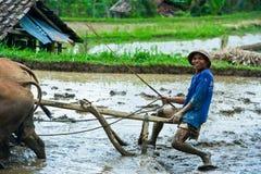 Homem que ara o campo do arroz em Bali, Indonésia imagens de stock royalty free