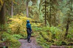 Homem que caminha curiosamente através de Hoh Rainforest fotos de stock royalty free