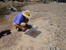 Homem que classifica safiras entre minerais Imagem de Stock