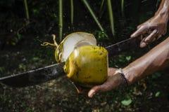 Homem que corta um coco ao meio Fotos de Stock Royalty Free