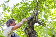 Homem que corta uma árvore Fotos de Stock Royalty Free