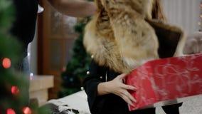 Homem que dá o presente do Natal da surpresa para a mulher video estoque