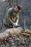 Homem que desbasta a árvore Imagem de Stock