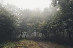 Homem que entra na floresta assombrada Imagem de Stock Royalty Free