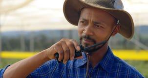 Homem que fala em talky walky na exploração agrícola 4k do mirtilo vídeos de arquivo
