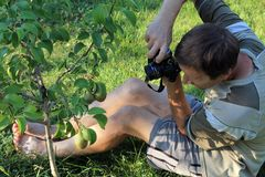 Homem que fotografa o fruto da pera no jardim Fotos de Stock Royalty Free