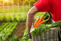 Homem que guarda a cesta com legumes misturados Imagem de Stock Royalty Free