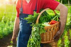 Homem que guarda a cesta com vegetais Imagens de Stock Royalty Free