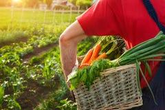 Homem que guarda a cesta de vime com vegetais Fotografia de Stock