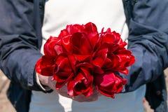 Homem que guarda o ramalhete de tulipas vermelhas Fotografia de Stock