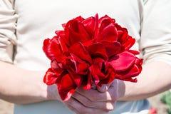 Homem que guarda o ramalhete de tulipas vermelhas Fotos de Stock