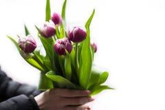 Homem que guarda tulipas cor-de-rosa Molde, cartaz ou cartão do vale-oferta - equipe guardar o ramalhete de tulipas cor-de-rosa p Imagens de Stock Royalty Free