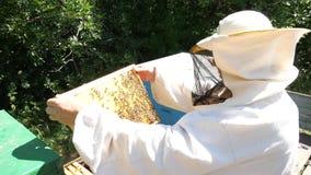 Homem que guarda um favo de mel completamente das abelhas Apicultor no desgaste protetor do trabalho que inspeciona o quadro no a filme