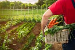 Homem que guarda uma cesta com legumes frescos Fotos de Stock Royalty Free