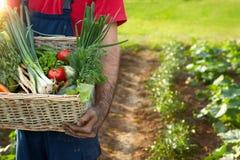Homem que guarda uma cesta com vegetais Imagem de Stock